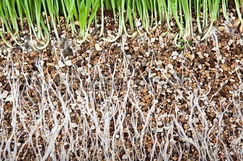 Et de la vermiculite