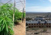 Photo of בקליפורניה הופכים את בתי הכלא לחממות קנאביס