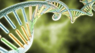 Photo of פרויקט מדעי חדש: מיפוי גנטי מלא של כל זני הקנאביס