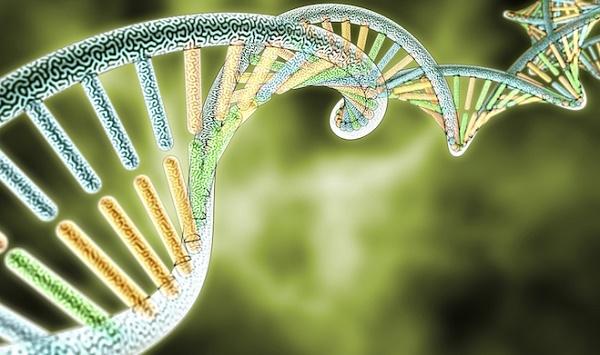 סליל גנטי של DNA - צמח קנאביס (מחקר גנטי קנאביס)