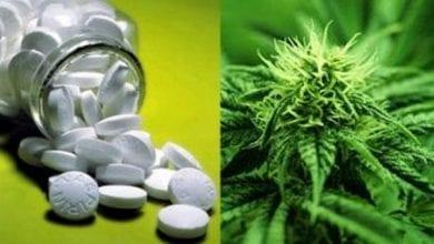 "Photo of ארה""ב לרופאים: ""הפסיקו לבדוק שרידי THC – היזהרו מתרופות"""