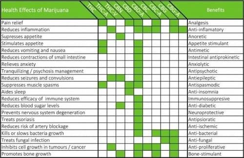 השפעות הקנאביס לפי תלות בחומרים פעילים - מה עושה כל קנבינואיד בצמח?