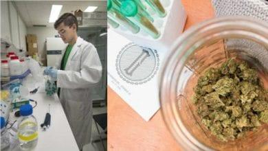 מדען במעבדה, מפקח על תהליך של הפקת THC (מריחואנה) משמרים (קרנות השקעה מקדמות ייצור קנבינואידם וטרפנים משמרים)