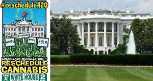 עישון קנאביס ציבורי מול הבית הלבן