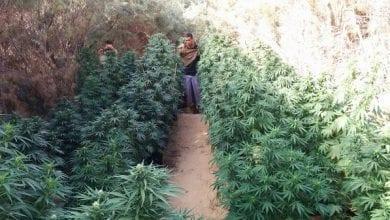 Photo of עברייני ישראל חושפים: כך מרוויחים מיליונים מגידול מריחואנה