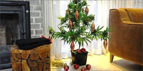 המתנה המושלמת ל-20 באפריל (יום הקנאביס): צמח קנאביס מלאכותי לקישוט הבית