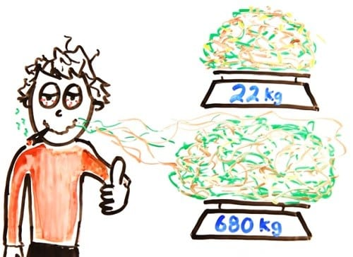 מנת יתר של קנאביס - 22 קילוגרם באכילה או 660 קילוגרם בעישון - בתוך 15 דקות בלבד