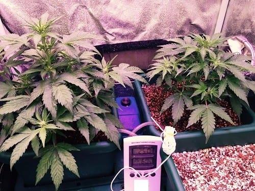 צמחים בשלב הצמיחה באוטופוט