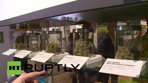 זני קנאביס בצנצנות זכוכית - קליפורניה