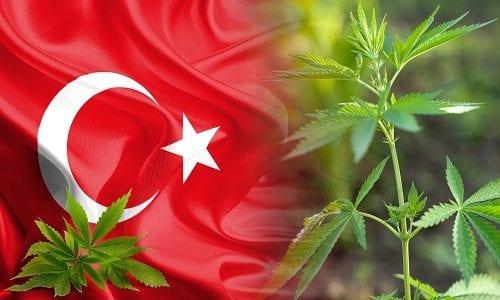 """מריחואנה בטורקיה - """"אוט"""""""