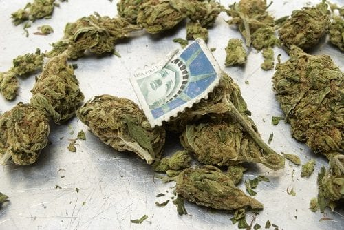 """ארה""""ב - הכינוי """"וויד"""" (Weed) הוא השם הנפוץ ביותר לקנאביס"""