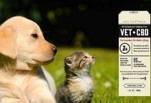 Photo of שמן CBD לבעלי חיים – להקלה על התקפים וכאבים
