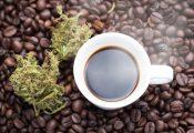 איך משפיע על הגוף ערבוב קנאביס עם קפה