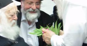 הרב קנייבסקי מברך על קנאביס