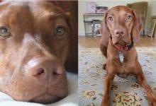 Photo of חטיפי קנאביס עוזרים לכלבים להתגבר על חרדת נטישה