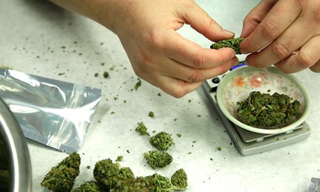 פרחי קנאביס (ירוק) חתוכים לחתיכות, על שולחן עם משקל דיגיטלי
