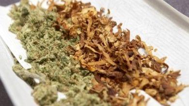 Photo of מחקר בדק באיזה מדינות מערבבים טבק בג'וינט – ועד כמה זה מזיק