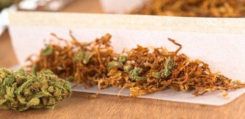 נייר ועליו ערבוב של קנאביס עם טבק - מעלה את הסיכון להתמכרות פי 5