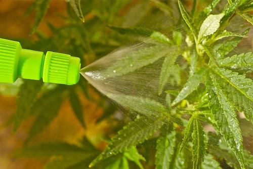 """השתמשו בבקבוק ריסוס כדי לפזר מים ודשן גם על העלים והענפים (מתוך: """"14 טיפים שיעזרו לכם לגדל הידרו בקלות"""")"""