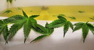 אמבטיית חשיש - טיפול ספא השומר על העור והבריאות