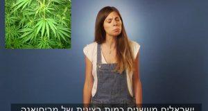 רני גרינשפן - הבדלים מריחואנה ישראל קנדה