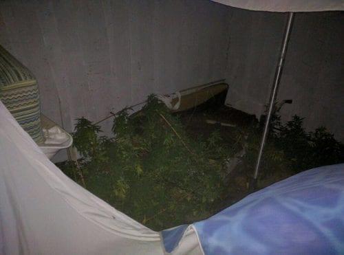 שתילי מריחואנה נמצאו במלון צל הרים בים המלח
