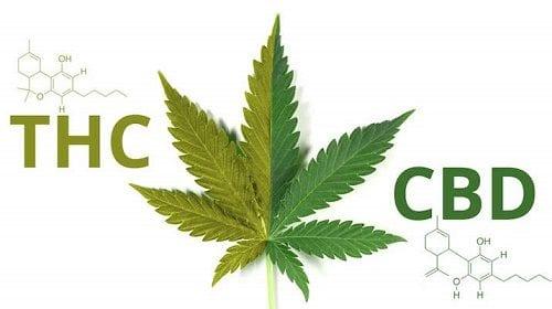 """החוקרים מצאו: CBD הופך ל-THC בתנאים חומציים (מחקר חדש: CBD יכול לגרום לתחושת """"היי"""" גם ללא THC)"""