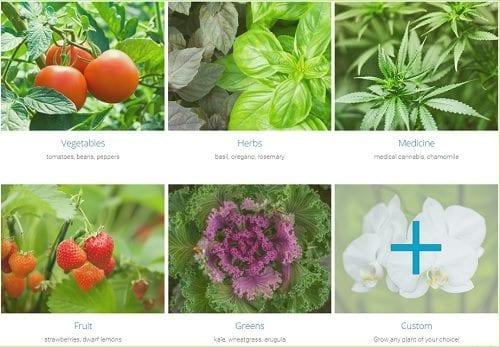 """'גרובו' - בוחרים """"מתכון"""" ומתחילים לגדל (הגינה של """"גרובו"""" - גידול הידרופוני מקצועי בסלון)"""