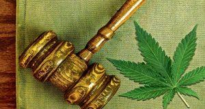 עלה קנאביס ופטיש של בית משפט (השופטת קבעה: מטופלי קנאביס רפואי מוגנים מתביעות)