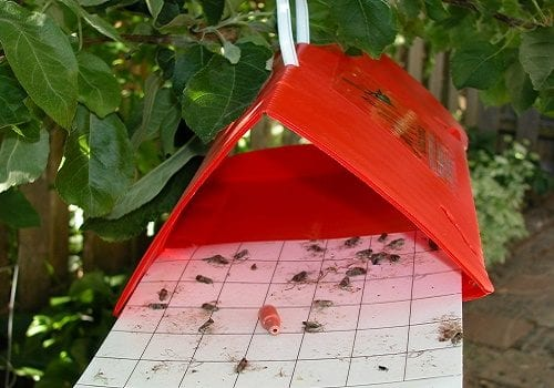 Trap pheromones with adhesive layer - effective against flying and cockroaches