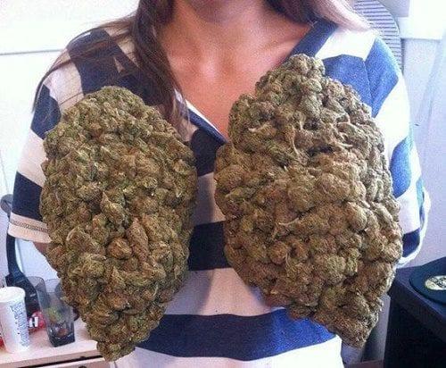 ריאות ירוקות (קנאביס) - לא מעשנים טבק
