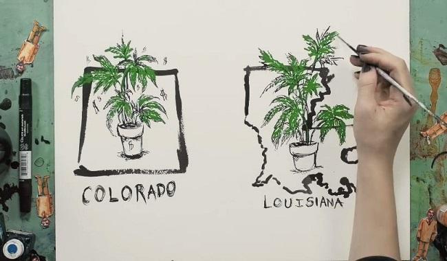 ציור צמחי מריחואנה