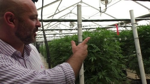 Yochai Golan Gild Fondateur de Better sur la base de cannabis médical dans l'incubateur