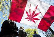 קנדה: שימוש חוקי בקנאביס יאושר ב-2018