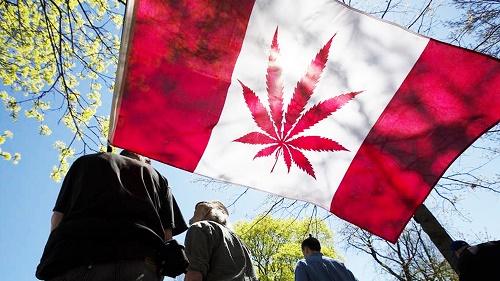 דגל קנדה עם עלה קנאביס - לגליזציה בקנדה
