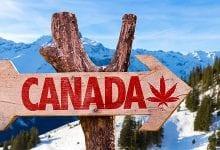 קנאביס בשוק הקנדי - הדרך ללגליזציה