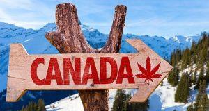 קנאביס בשוק הקנדי - הדרך ללגלזציה