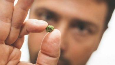 Photo of מחקר ישראלי: מנות THC קטנות יכולות לשפר את הזיכרון