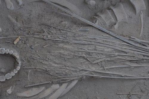 שרידי קנאביס עתיקים בני 2,500 נמצאו בסין על ידי ארכיאולוגים