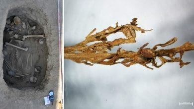 שרידי קנאביס עתיקים נמצאו בקבר בסין