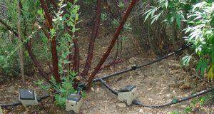 צינורות השקיה קנאביס