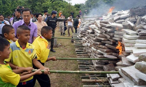 שריפת מריחואנה תאילנד