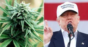 דונלד טראמפ ופרח מריחואנה - מנצחי בחירות 2016