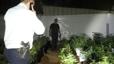 Photo of רמת הגולן: לול תרנגולות הוסב לחוות גידול קנאביס