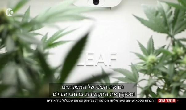 סטארטאפים ישראלים בתחום הקנאביס