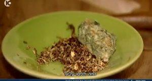 פרח קנאביס קססה טבק