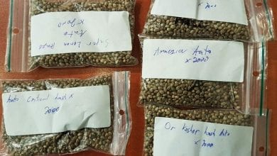 "Photo of נתב""ג: 10,000 זרעי קנאביס נתפסו באריזות 'פרינגלס'"