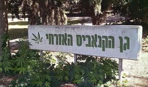 גן הורדים - גן הקנאביס