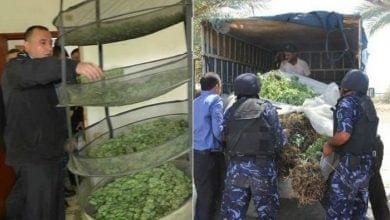 Photo of חברון: 4 קומות מלאות בשתילי קנאביס נחשפו בבניין מגורים