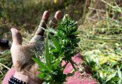 בוקר טוש: מסע אל גבעות הצ'אראס של הודו